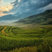 agricoltura. sasint, https://pixabay.com/it/photos/agricoltura-asia-gatto-cina-nuvola-1807570/