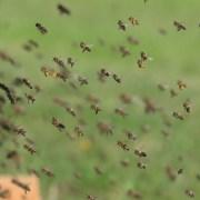 api, https://pixabay.com/it/photos/api-alveare-il-miele-le-api-lavoro-1975820/, CC0, sumx