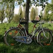 Mauerpark, modi74, https://pixabay.com/it/photos/mauerpark-berlino-prato-bici-ruota-741226/ CC0