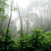 Foresta amazzonica c David Riaño Cortés Pexels https://www.pexels.com/photo/rainforest-during-foggy-day-975771/