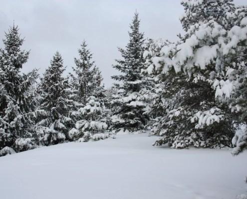 Winter Wonderland., chintermeyer, https://www.flickr.com/photos/twentysevenphotos/5292411722/in/photolist-94EZBY-2dGKmLW-aZGMaZ-tYXtSQ-UKfmyX-21SBwwm-21SBzpL-94UesP-5Rrk4r-21Ncz8W-HVRHeD-Dbg8dP-22NfNUY-QNJMUt-ZYvXok-bzPS8Z-7qDvgW-EKh9sf-5LvX4y-5LvXdS-HTrGWV-Qw6TwV-22TpSe4-dQ1EHr-2ddwiPR-J1xjpM-8XQ6rS-21FUMK9-pBkdre-21WYEoY-8XQ8Mw-qEU52e-EjiFu3-95k4QQ-8XM1hg-dQ1EA2-95c3oU-Ec5qss-JE9xtF-22FbWXk-qBVDVo-96ErBw-95k3m7-95gYYH-2cQScQA-97Bv8R-PuLR7b-24iK2Nh-96BiTB-7tA9Up