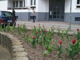 gleim_tulpen