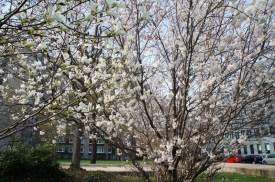 spring17