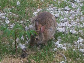 """""""Mein Name ist Hase..."""""""