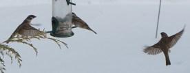 winter_birds13