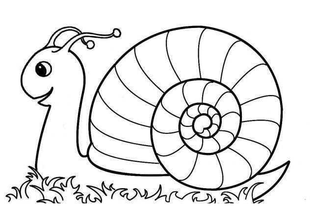 Escargot Dessin Couleur