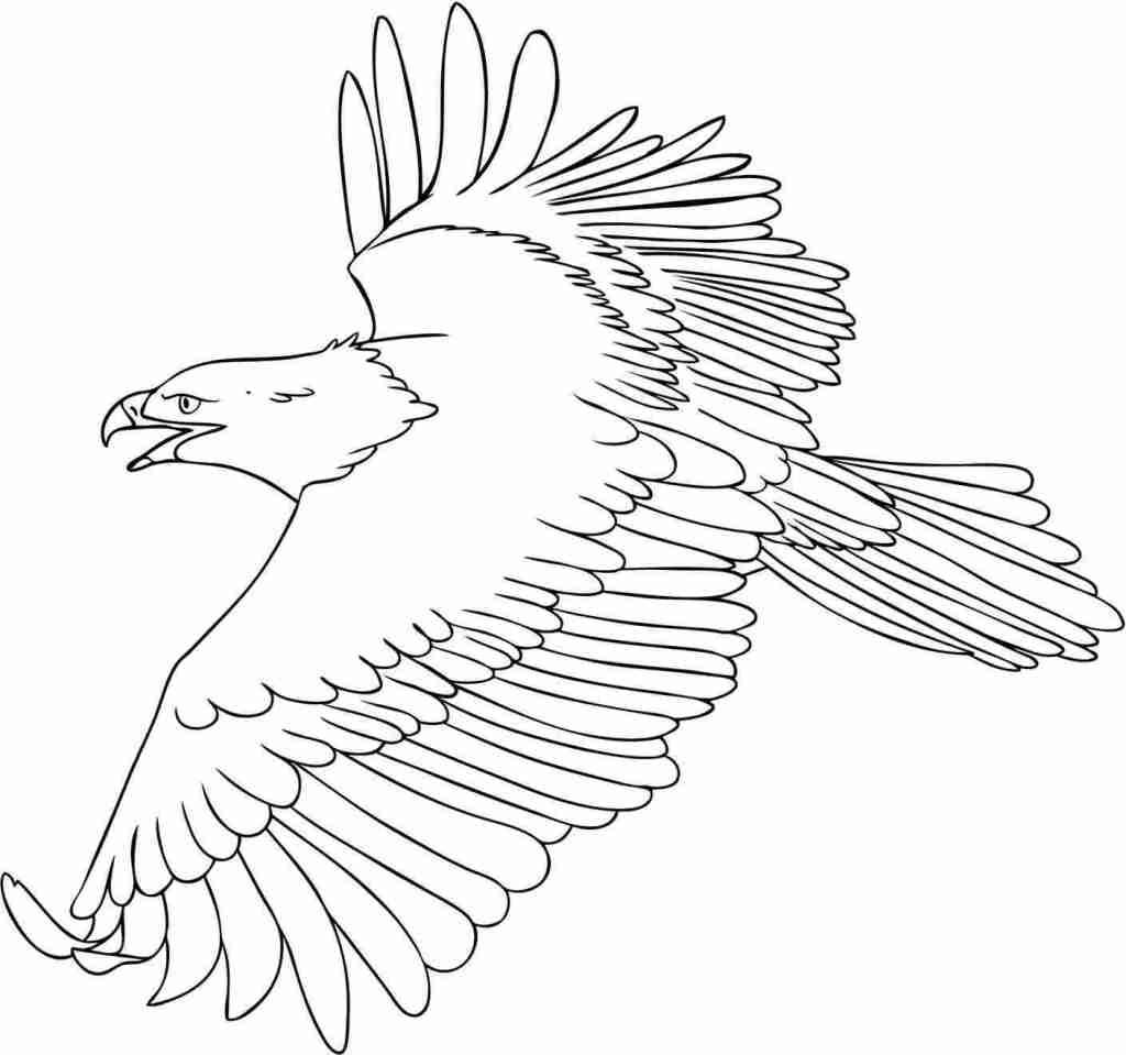 Libre Dessin Aigle Royal