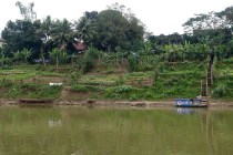 Vegetable gardens on river bank