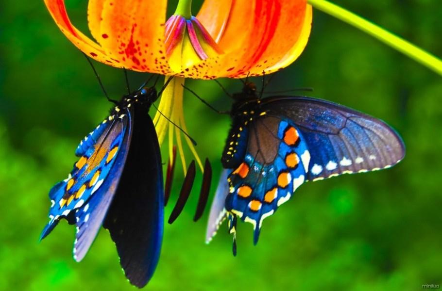 Médico Stawiarski doa acervo de borboletas para Museu Nacional - bernadetealves.com