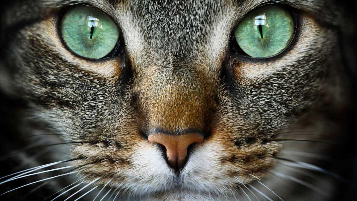 Dia Mundial do Gato: da Itália para o mundo
