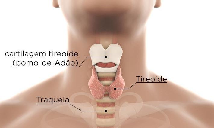 Sinais do mau funcionamento da tireoide - exame - Bernadete Alves