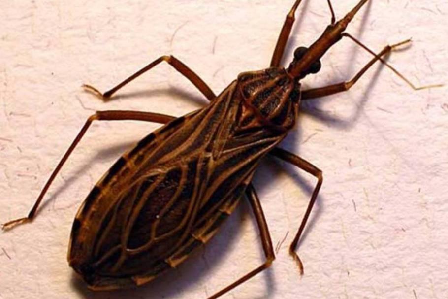 Canela-seca ou canela-branca combate parasitas - Bernadete Alves