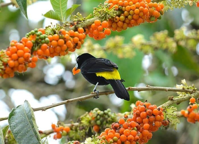 Dia da Árvore – proteger e valorizar a vida - Bernadete Alves