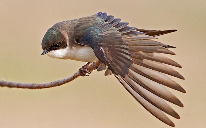 Dia das Aves - conhecer para proteger - Bernadete Alves