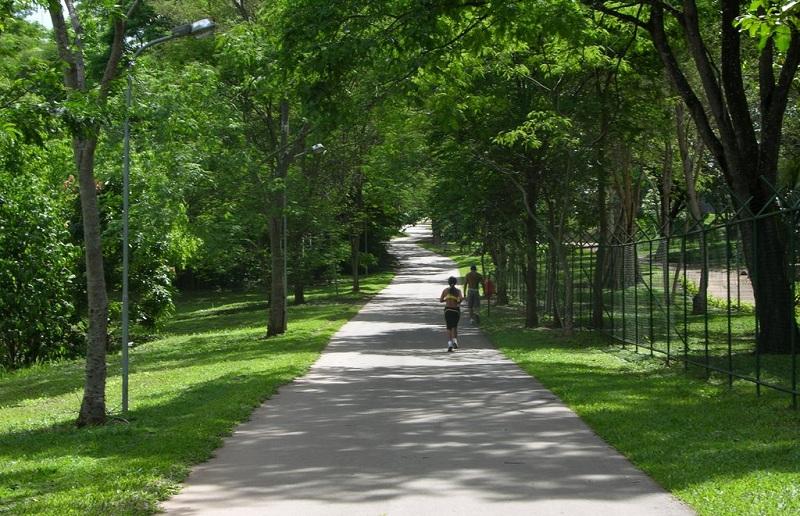 Tempo de Plantar – Parques do DF ganham mais árvores do cerrado - Bernadete Alves