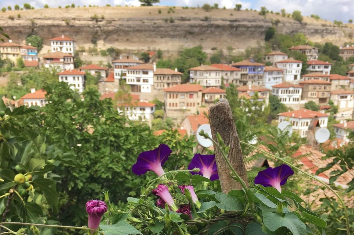 Safran ve Safranbolu