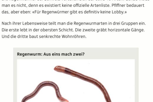 Screenshot Ausschnitt Artikel Regenwurm