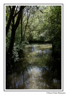 Parc ornithologique de Saint - Hilaire - la - Palud