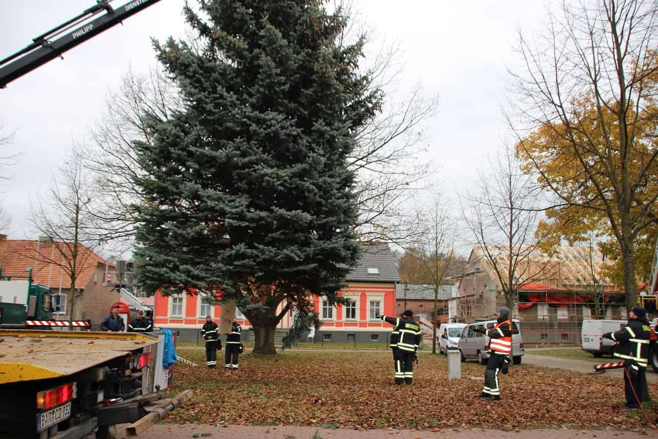 Weihnachtsbaum schwebte heute in Schwanebeck ein