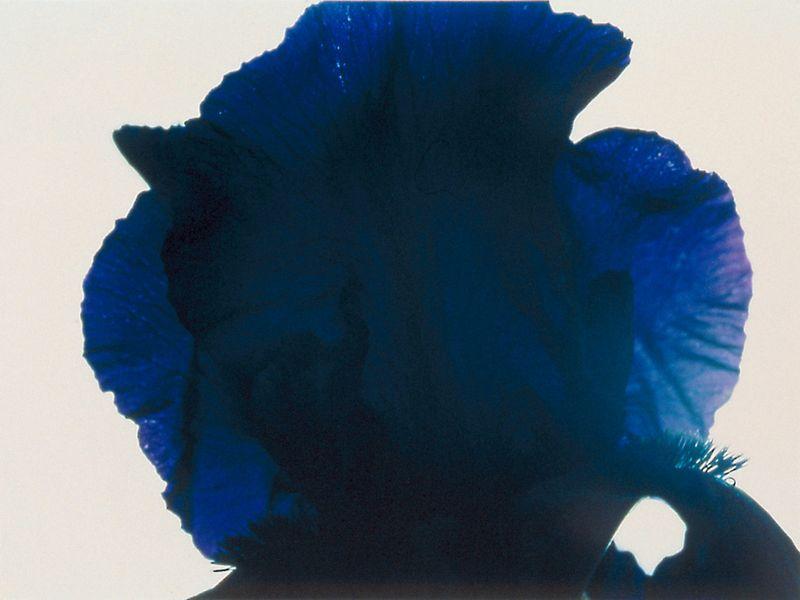 violetter klang (041) - 1997