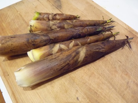 Bamboo shoot before peeling