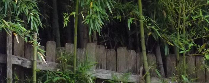 Bamboo wall holding up fence tiny 3