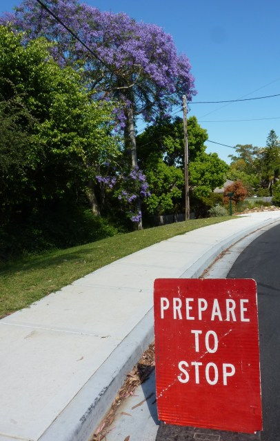 Prepare to stop and marvel at the suburban glories of jacaranda