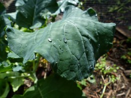 The miraculous tears of the broccoli in the sacred garden