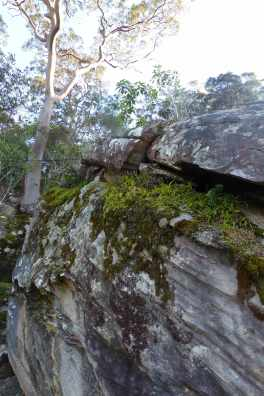 Rock garden in Brisbane Water National Park