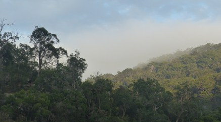 Fog on the hillside