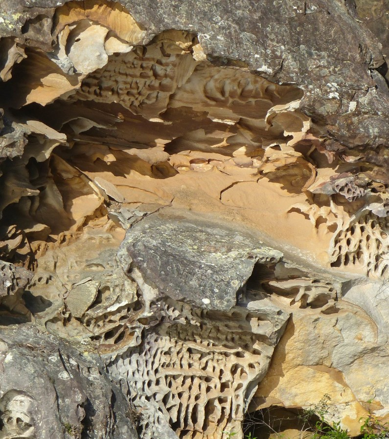 Honeycomb weathering in sandstone on Bujwa Bay