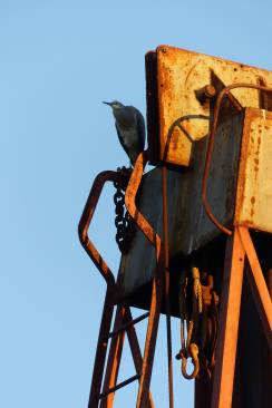 Heron on crane for crop