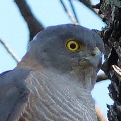 This year's bird - a smaller eye?