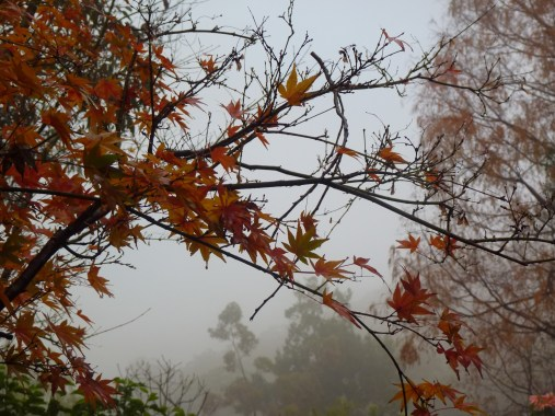 Autumn leaves in the mist