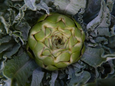 First artichoke of the year