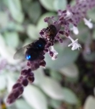Aesthetically pleasing flies