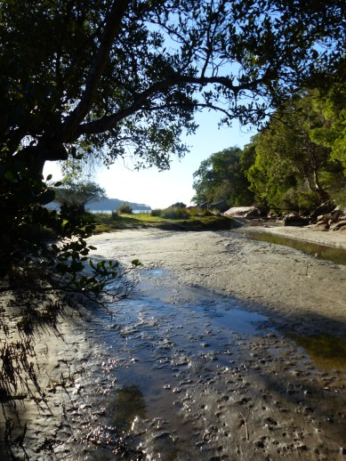 Low tide in the creek