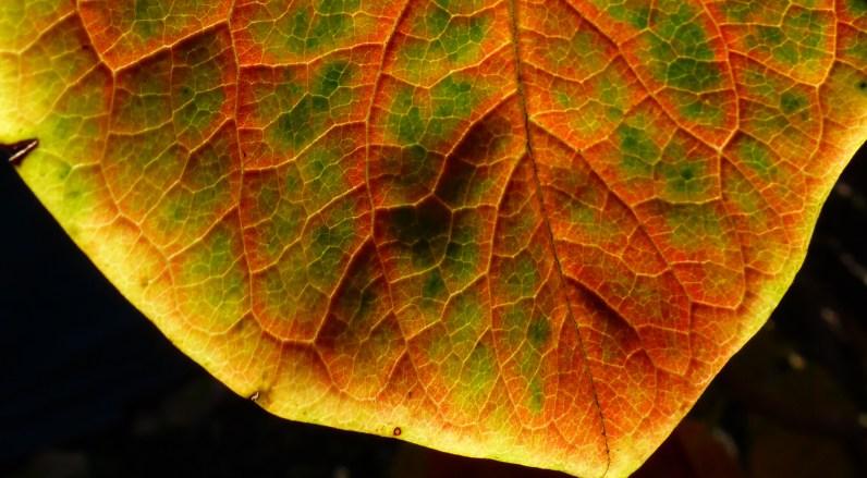 Green and orange for closeup real crop horizontal