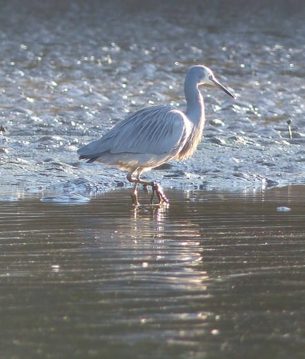 Heron 2 hunting beard and eyeball crop