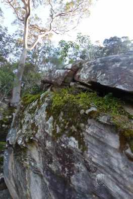Rock garden in Brisbane Water National Park