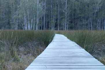Board walk through the saltmarsh near Berowra Creek
