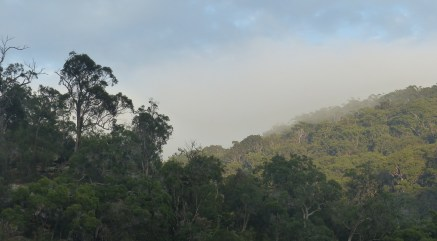 Fog on the hillside