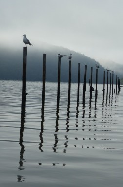 Sirens on oyster poles