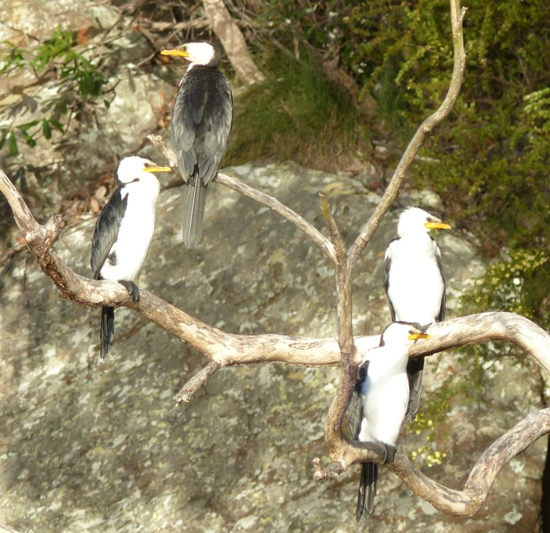 Pied kingfishers taking in the rays