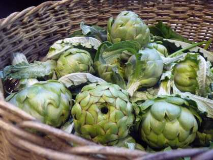 A previous year's globe artichoke harvest