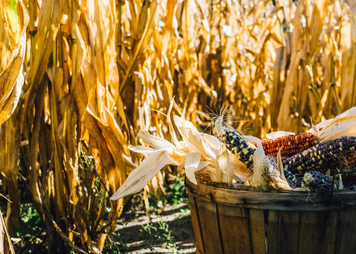 Why and how to implement farm-to-table in your restaurant | Berries and Spice