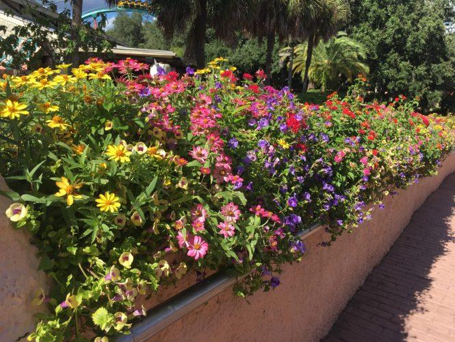 Busch Gardens Flowers