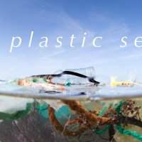 A Plastic Sea #Bermuda @KBBdotBM @greenrockorg