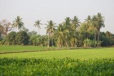 Thais groen blijft mooi