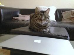 Diki veut me piquer mon Mac
